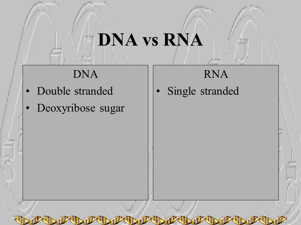 DNA vs RNA DNA Double stranded Deoxyribose sugar RNA Single stranded