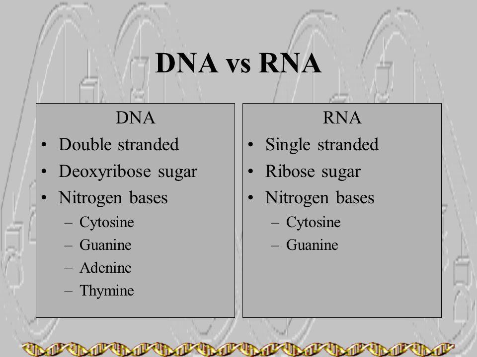 DNA vs RNA DNA Double stranded Deoxyribose sugar Nitrogen bases RNA