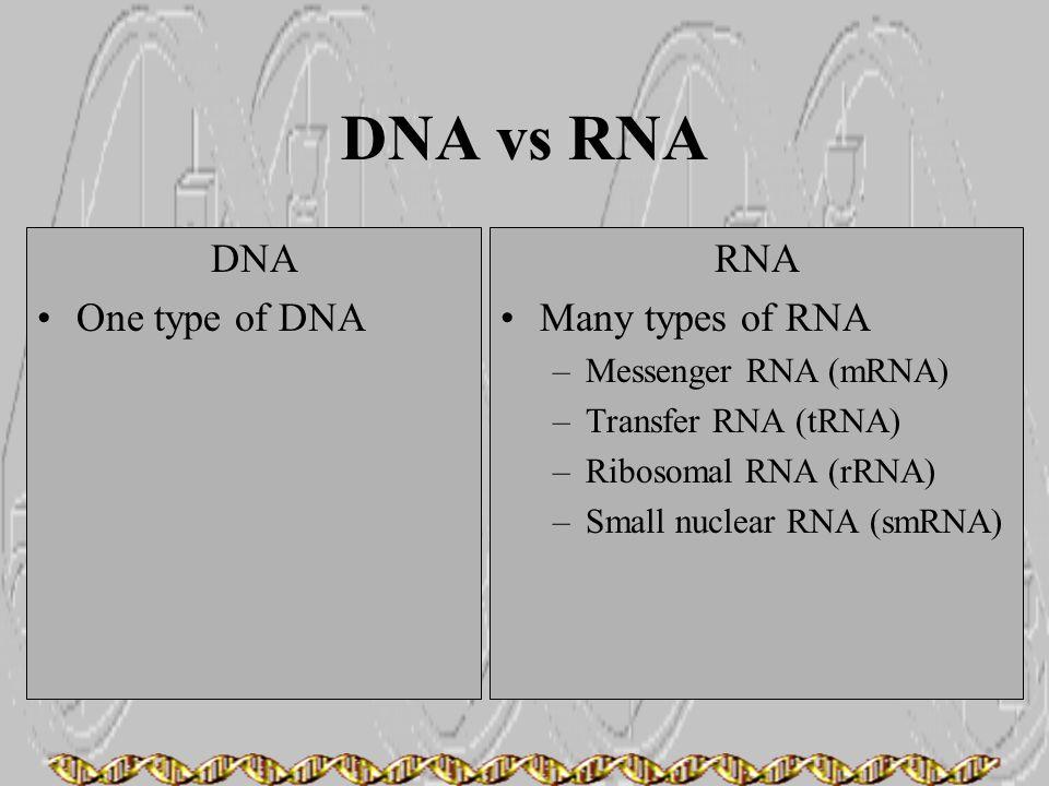 DNA vs RNA DNA One type of DNA RNA Many types of RNA