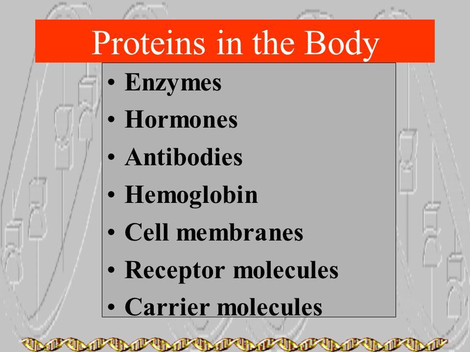 Proteins in the Body Enzymes Hormones Antibodies Hemoglobin