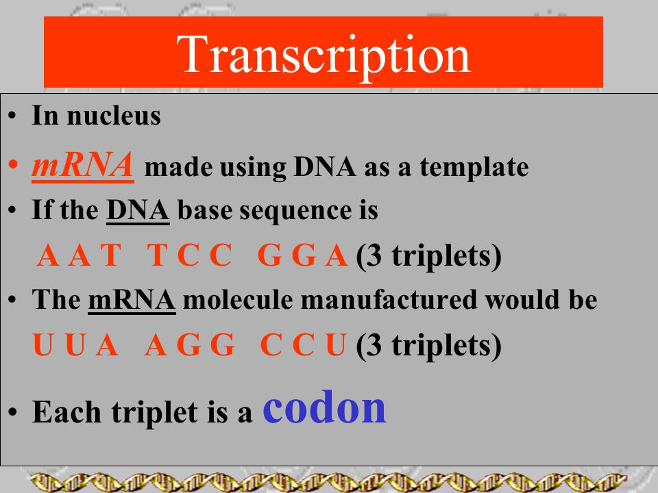 Transcription mRNA made using DNA as a template
