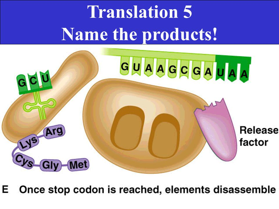 Translation 5 Name the products!