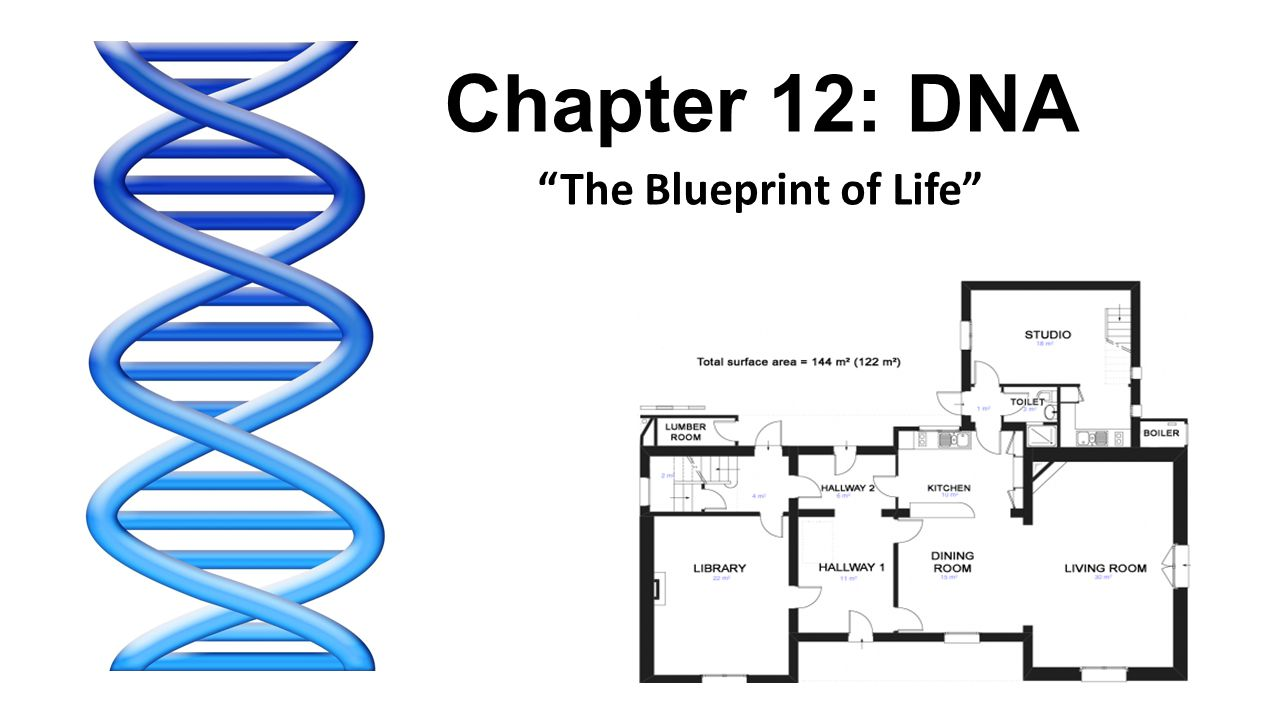 The blueprint of life ppt video online download the blueprint of life malvernweather Images