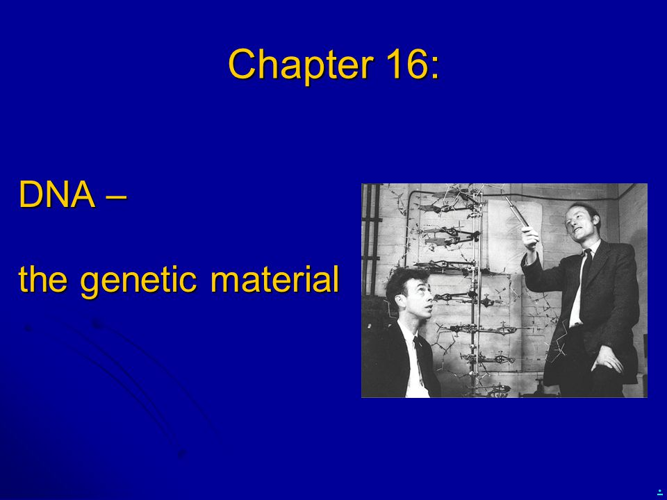 Chapter 16: DNA – the genetic material