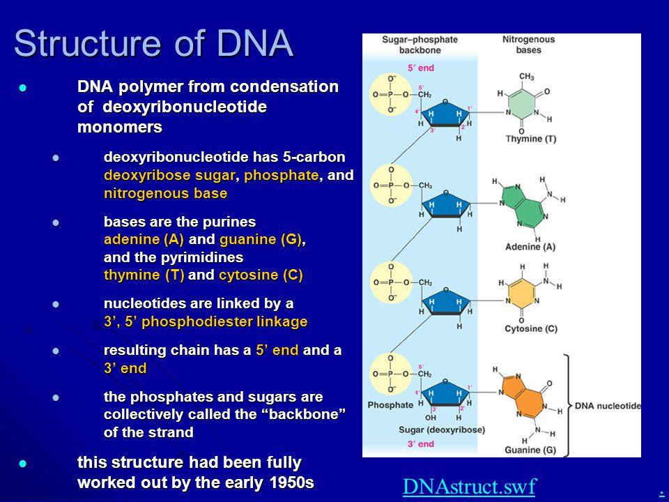 Structure of DNA DNAstruct.swf