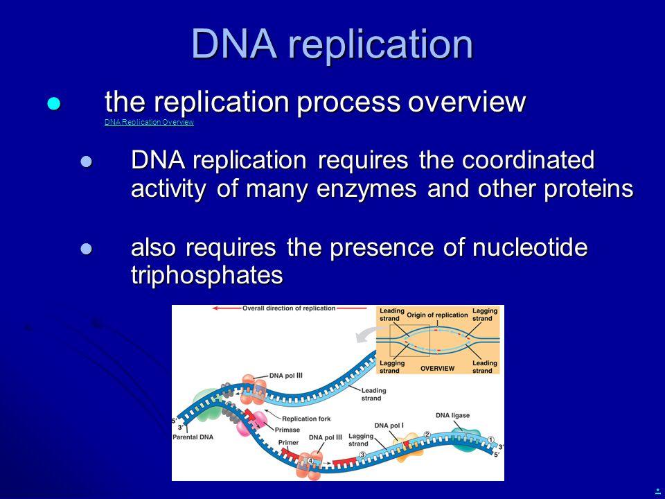 DNA replication the replication process overview DNA Replication Overview.