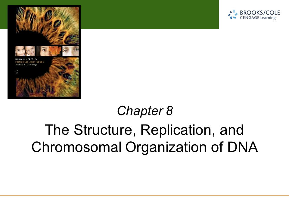 The Structure, Replication, and Chromosomal Organization of DNA