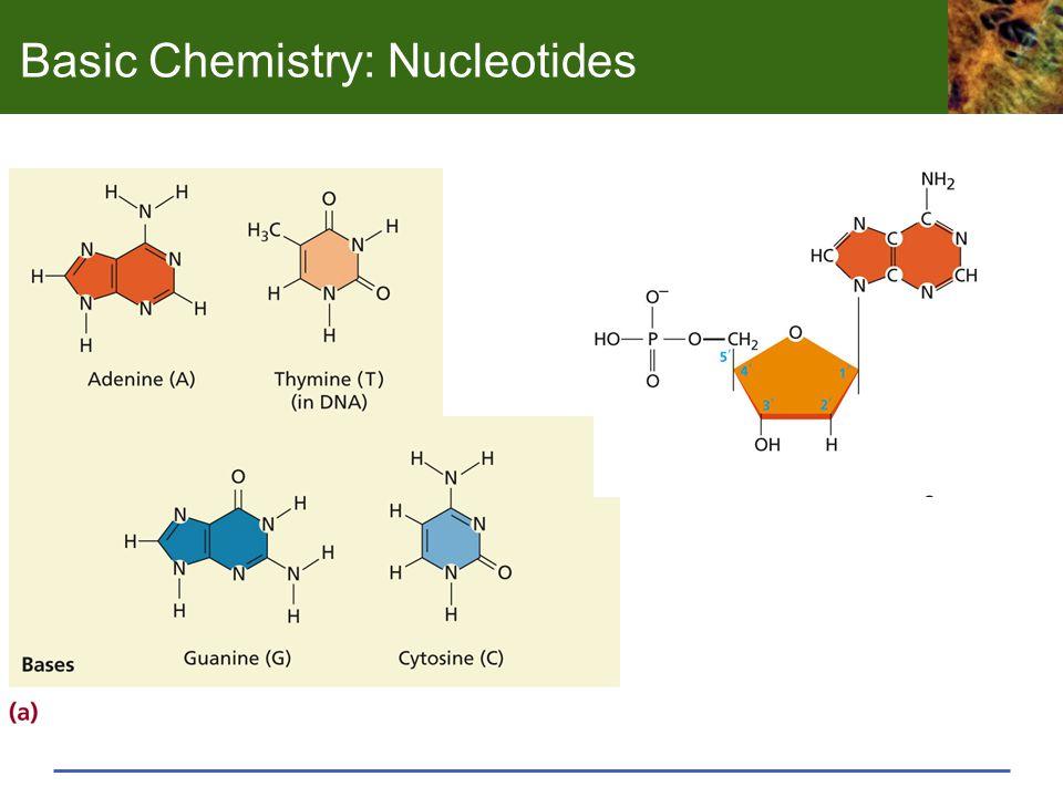 Basic Chemistry: Nucleotides