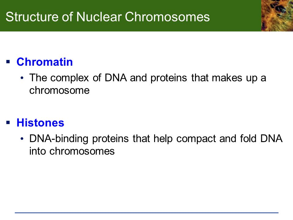 Structure of Nuclear Chromosomes
