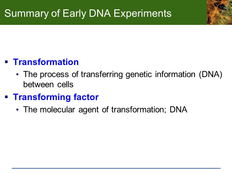 Summary of Early DNA Experiments