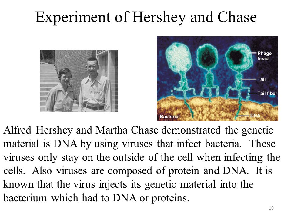 Experiment of Hershey and Chase