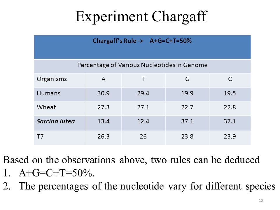 Chargaff s Rule -> A+G=C+T=50%