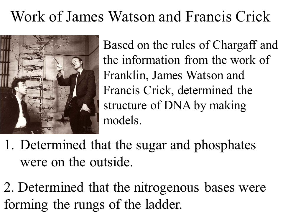 Work of James Watson and Francis Crick