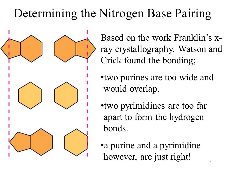 Determining the Nitrogen Base Pairing