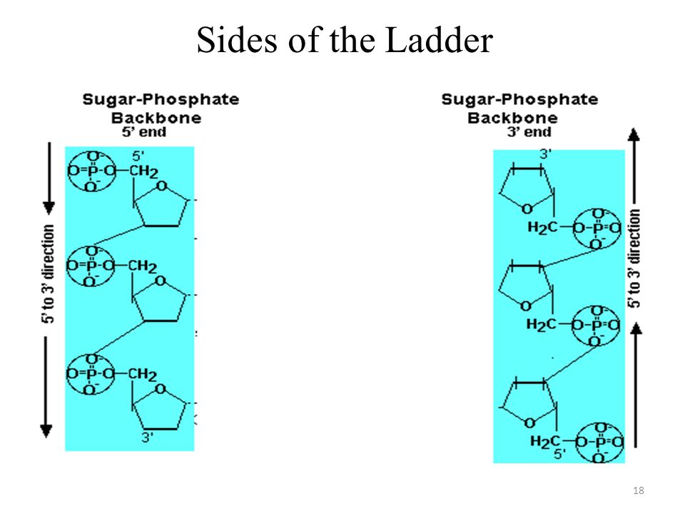 Sides of the Ladder