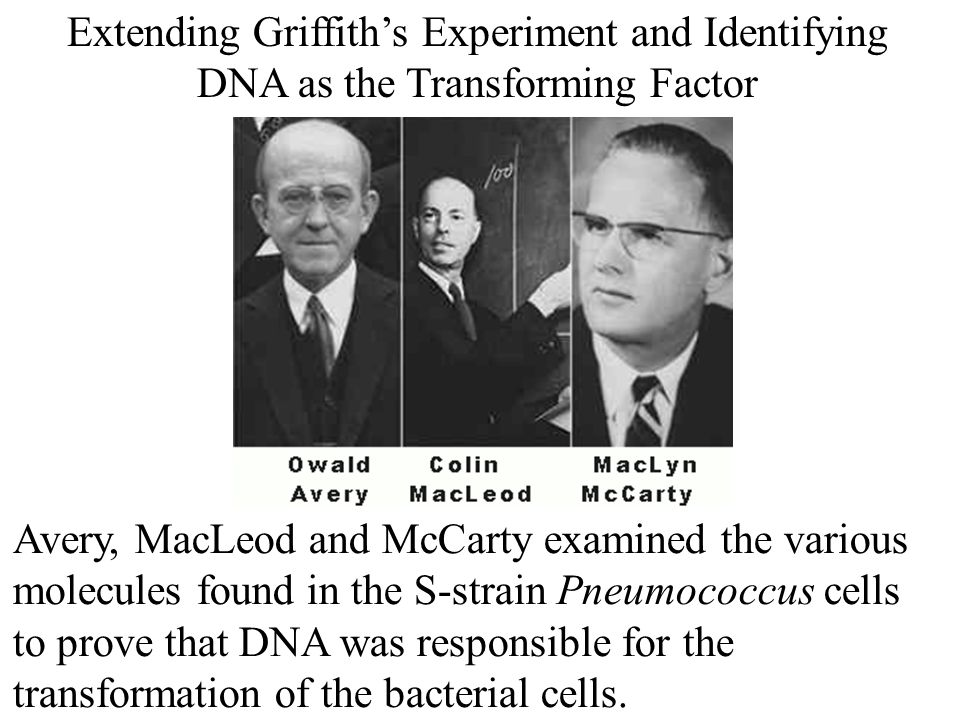 Extending Griffith's Experiment and Identifying DNA as the Transforming Factor