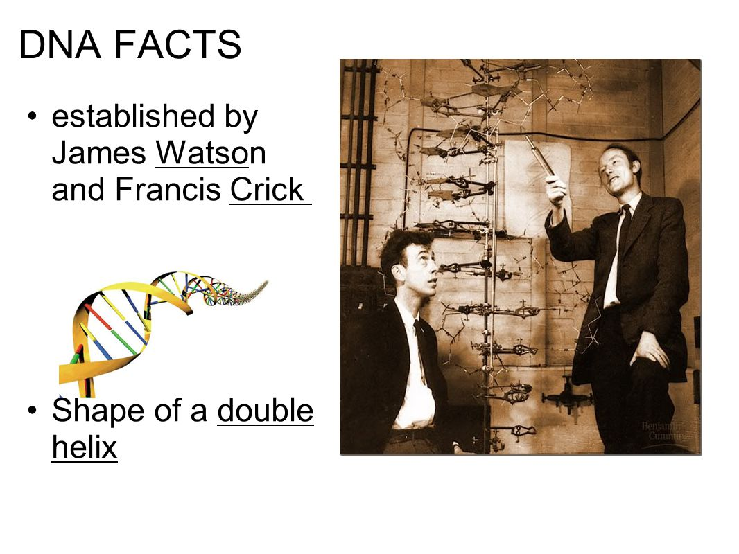 DNA FACTS established by James Watson and Francis Crick