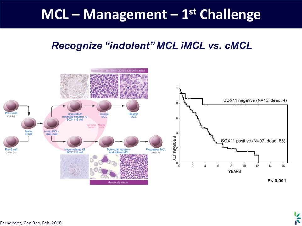 MCL – Management – 1st Challenge