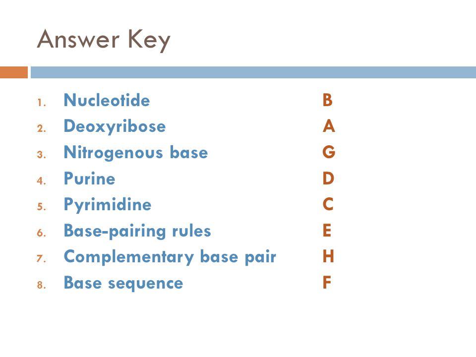 Answer Key Nucleotide B Deoxyribose A Nitrogenous base G Purine D