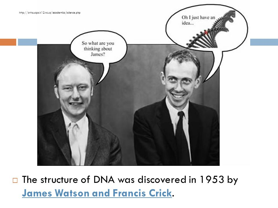 http://svhs.ucps.k12.nc.us/academics/science.php The structure of DNA was discovered in 1953 by James Watson and Francis Crick.