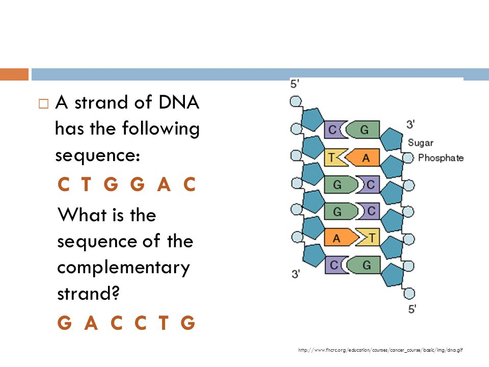 A strand of DNA has the following sequence: