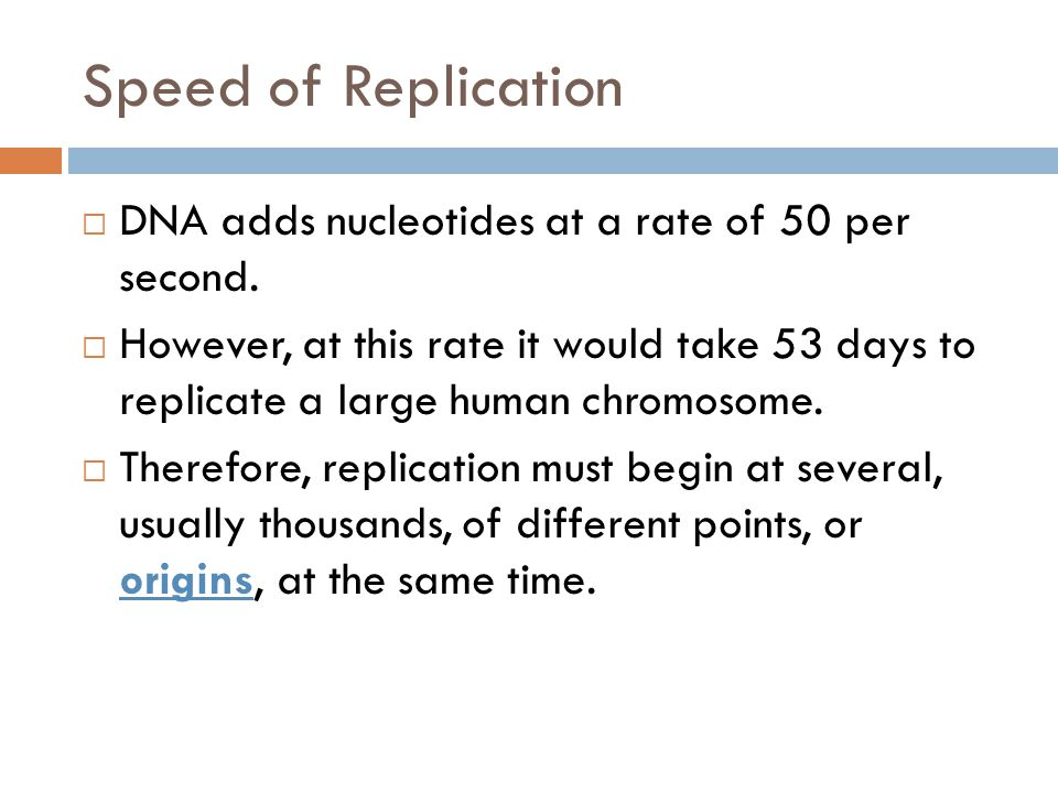 Speed of Replication DNA adds nucleotides at a rate of 50 per second.