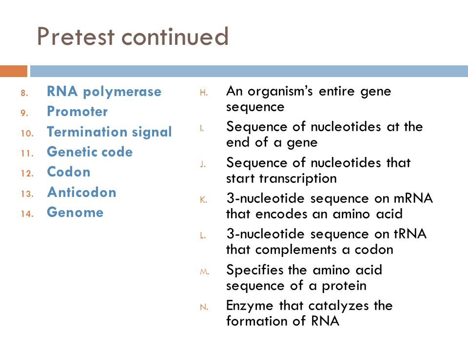 Pretest continued RNA polymerase An organism's entire gene sequence