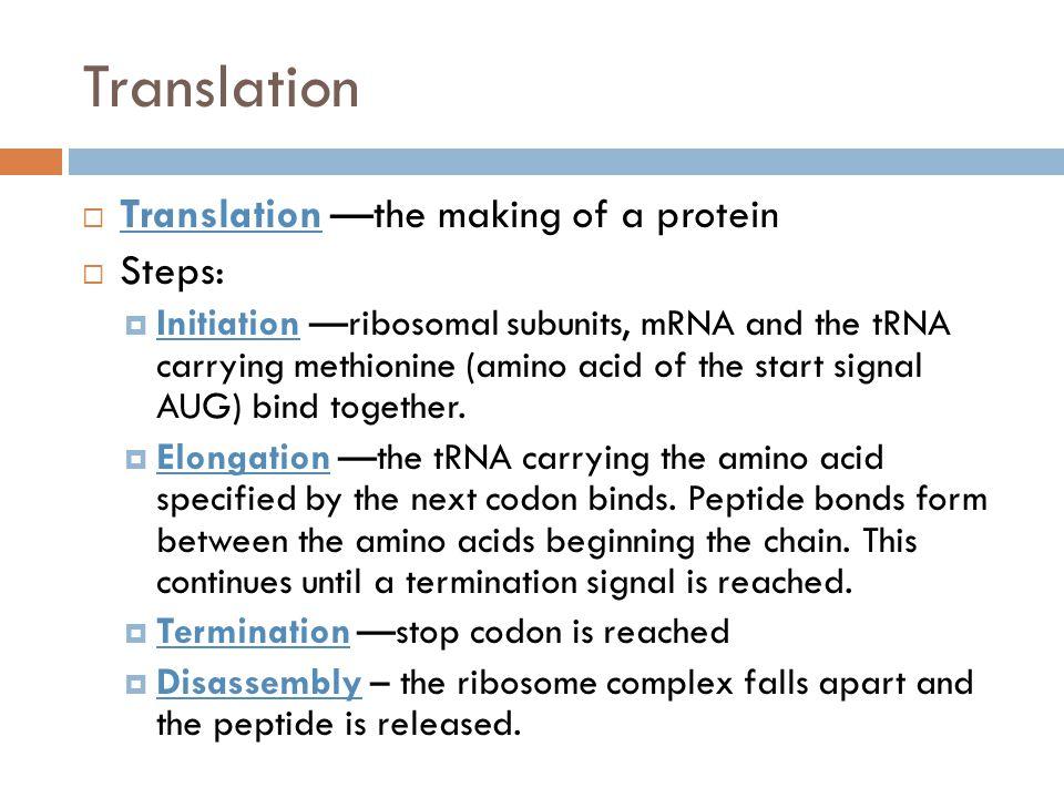 Translation Translation —the making of a protein Steps: