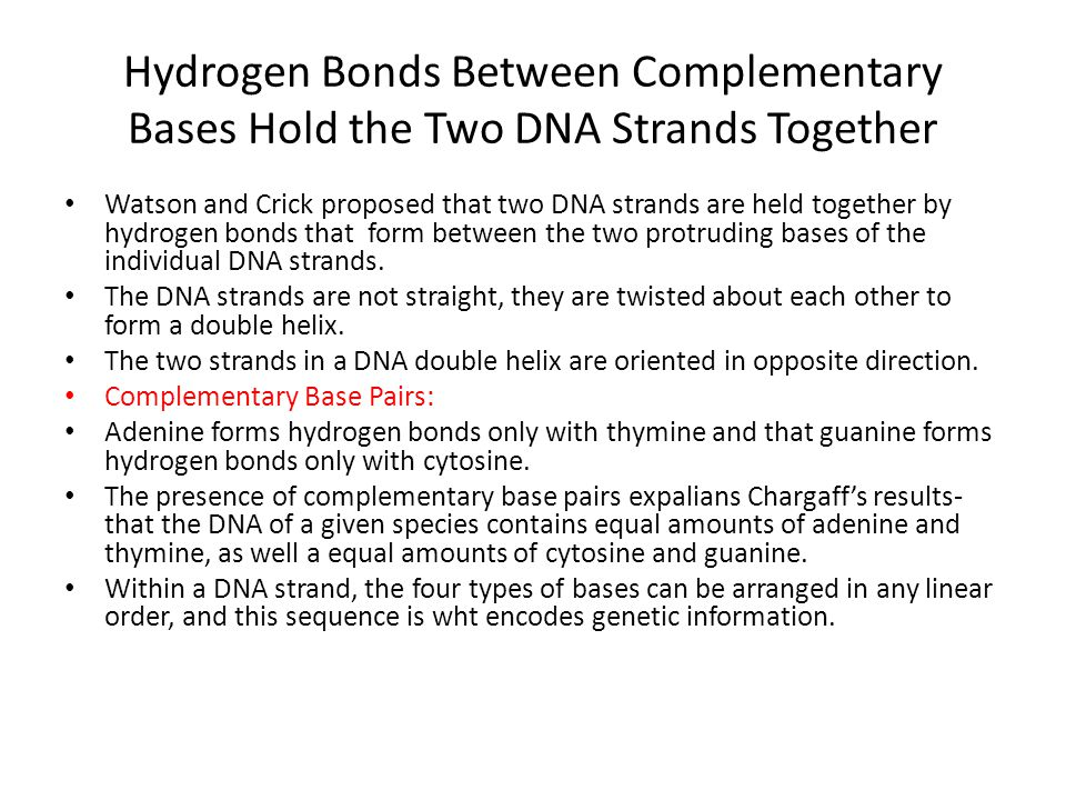 Hydrogen Bonds Between Complementary Bases Hold the Two DNA Strands Together