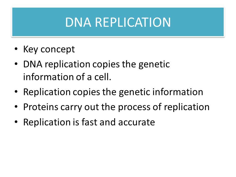 DNA REPLICATION Key concept