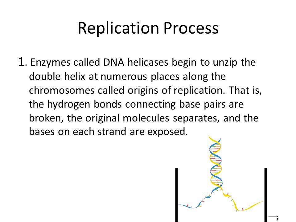 Replication Process
