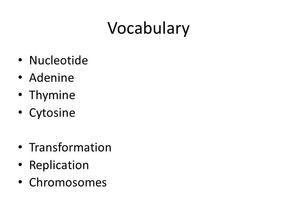 Vocabulary Nucleotide Adenine Thymine Cytosine Transformation