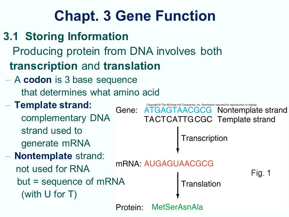Chapt. 3 Gene Function 3.1 Storing Information