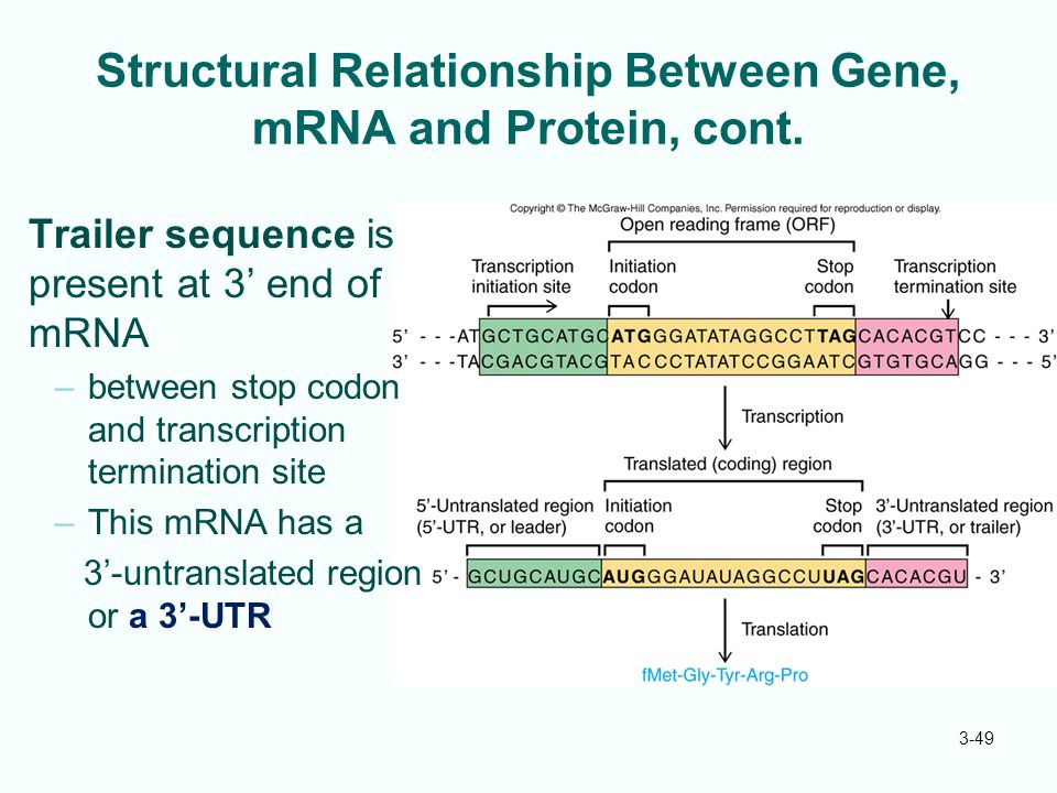 what is the relationship between dna genes and protein