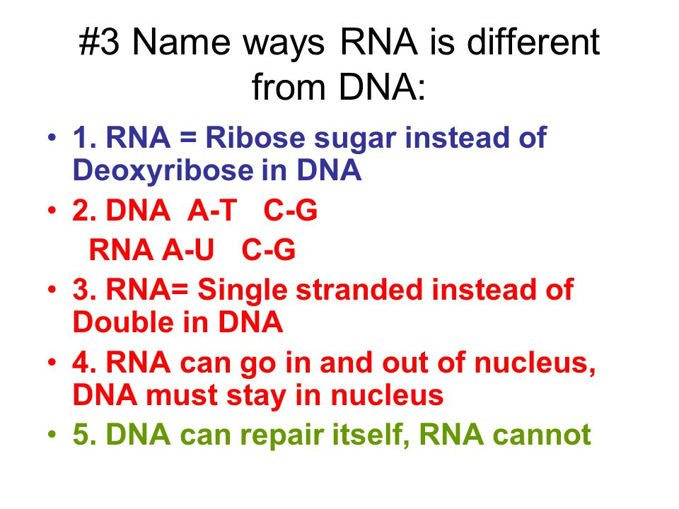 #3 Name ways RNA is different from DNA: