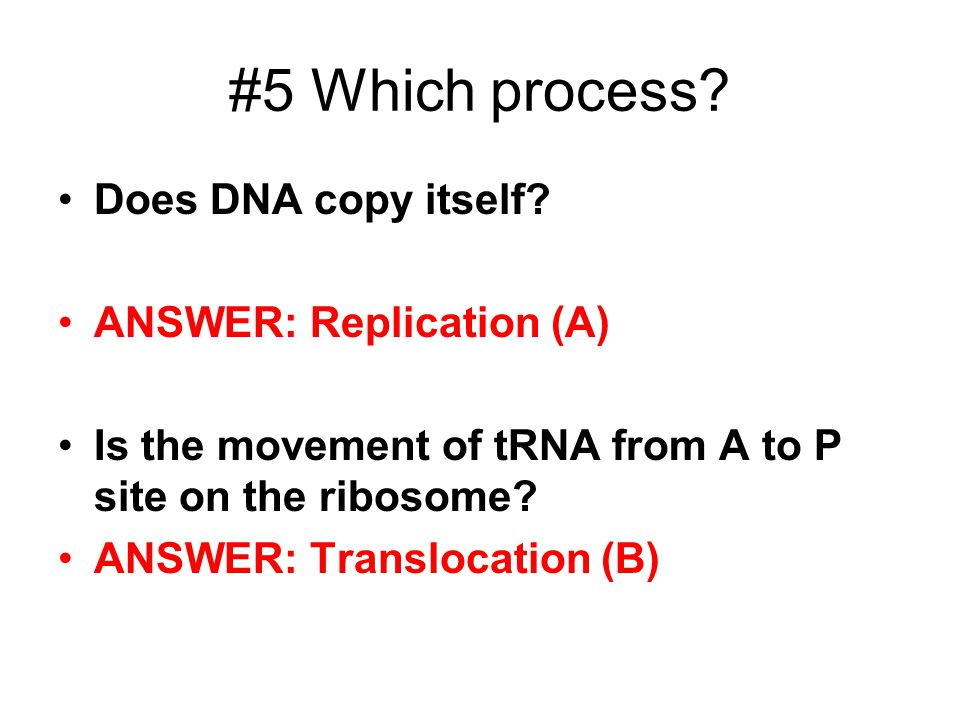 DNA Protein Synthesis and Viruses ppt video online download – Dna Review Worksheet Answer Key