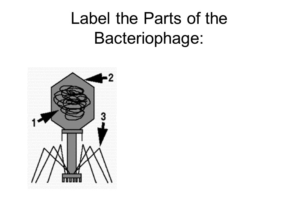 Label the Parts of the Bacteriophage: