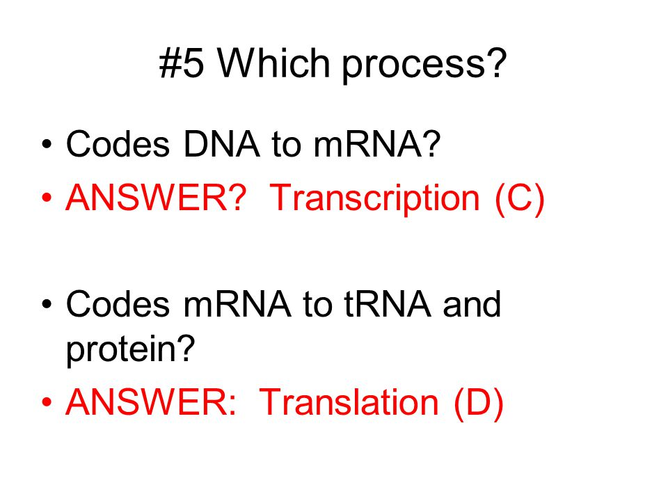 #5 Which process Codes DNA to mRNA ANSWER Transcription (C)