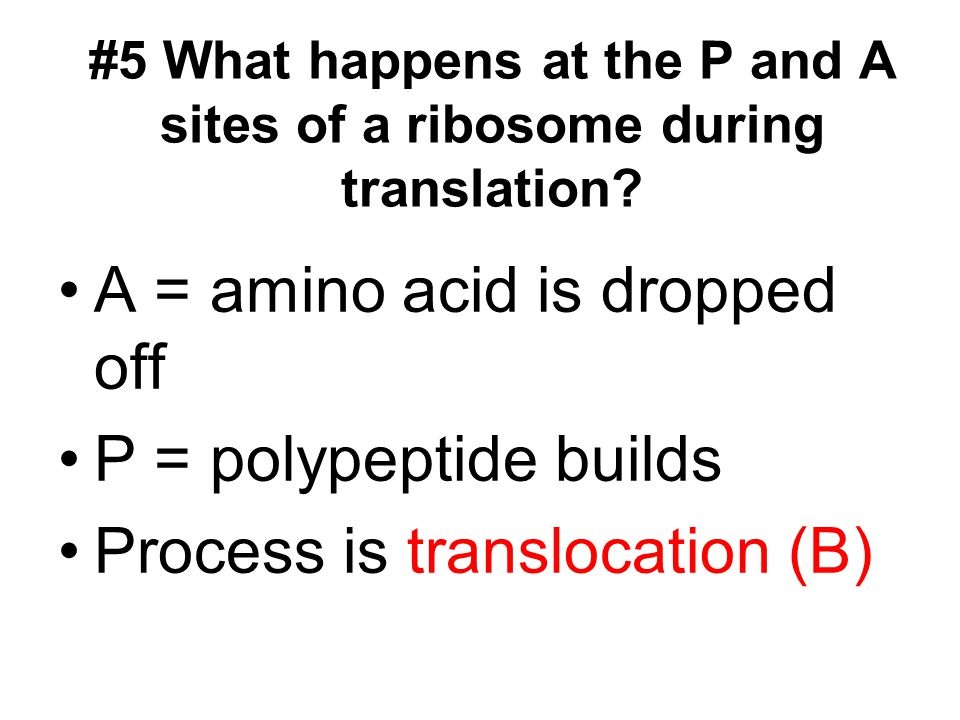 #5 What happens at the P and A sites of a ribosome during translation