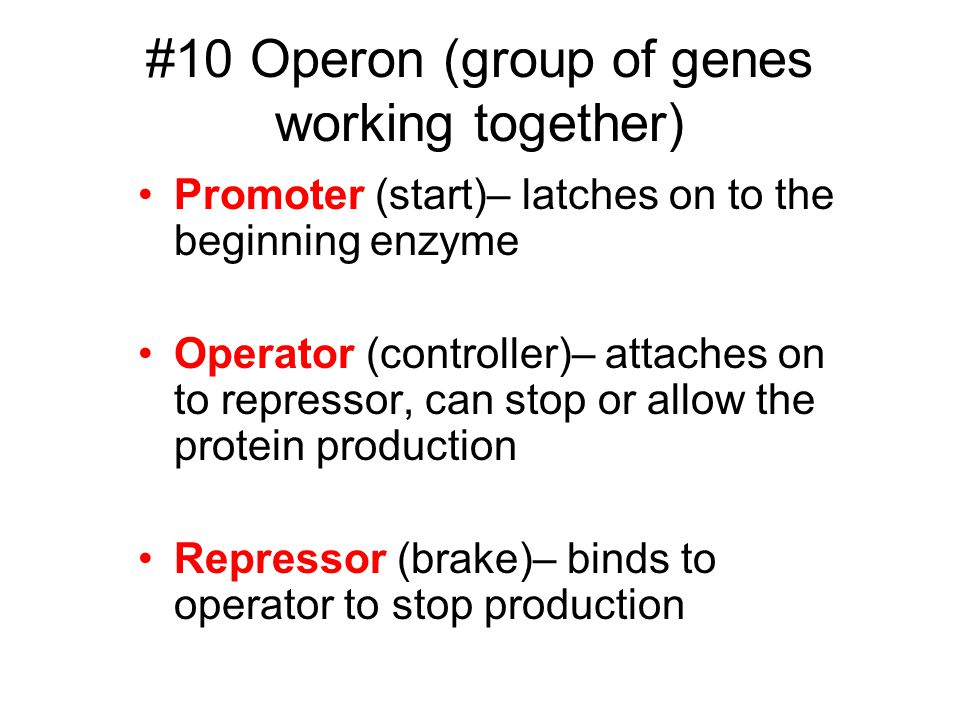 #10 Operon (group of genes working together)