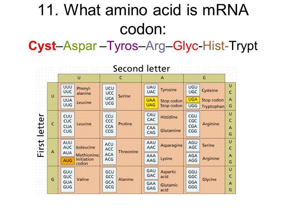 11. What amino acid is mRNA codon: Cyst–Aspar –Tyros–Arg–Glyc-Hist-Trypt