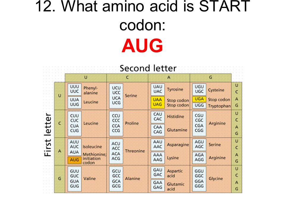12. What amino acid is START codon: AUG