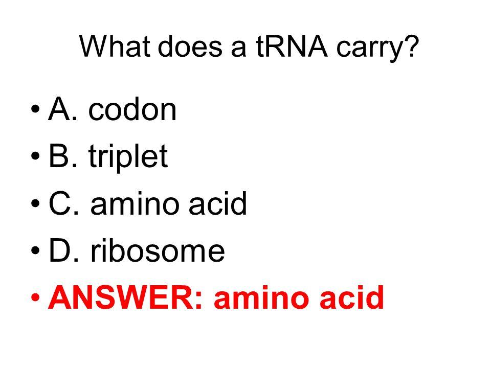 A. codon B. triplet C. amino acid D. ribosome ANSWER: amino acid
