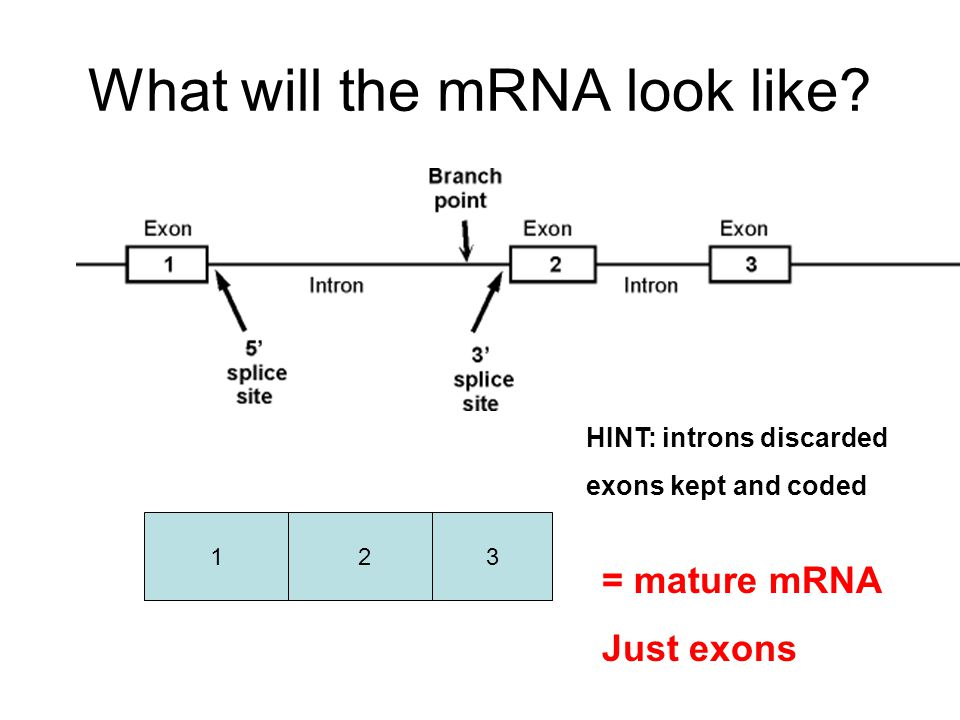 What will the mRNA look like