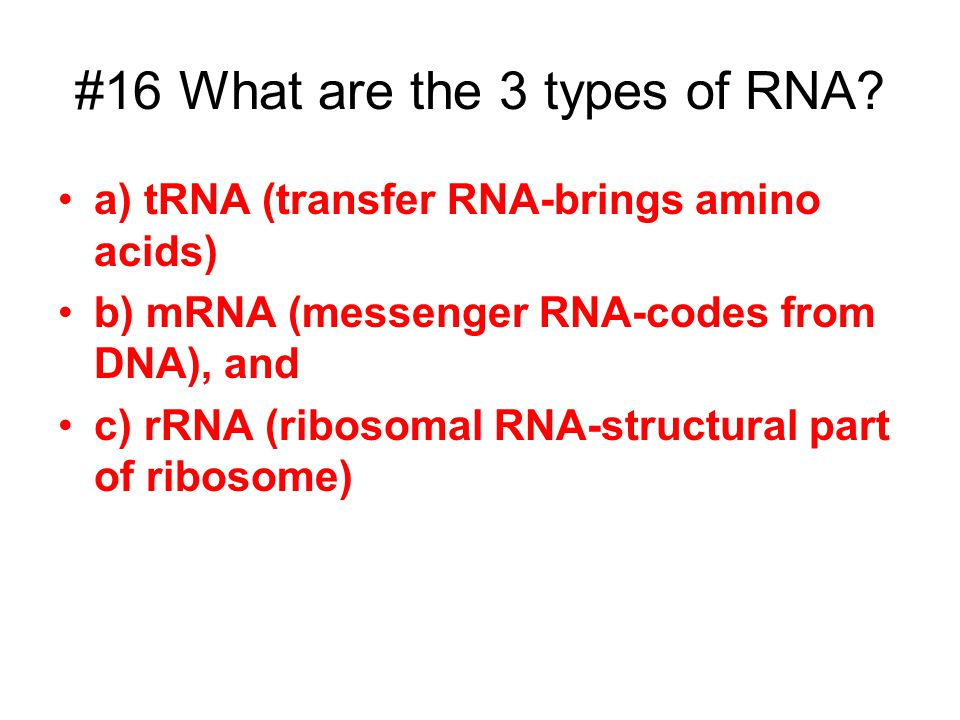 #16 What are the 3 types of RNA