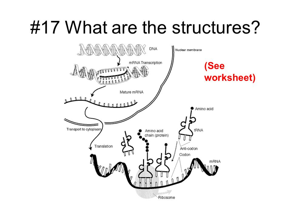 #17 What are the structures