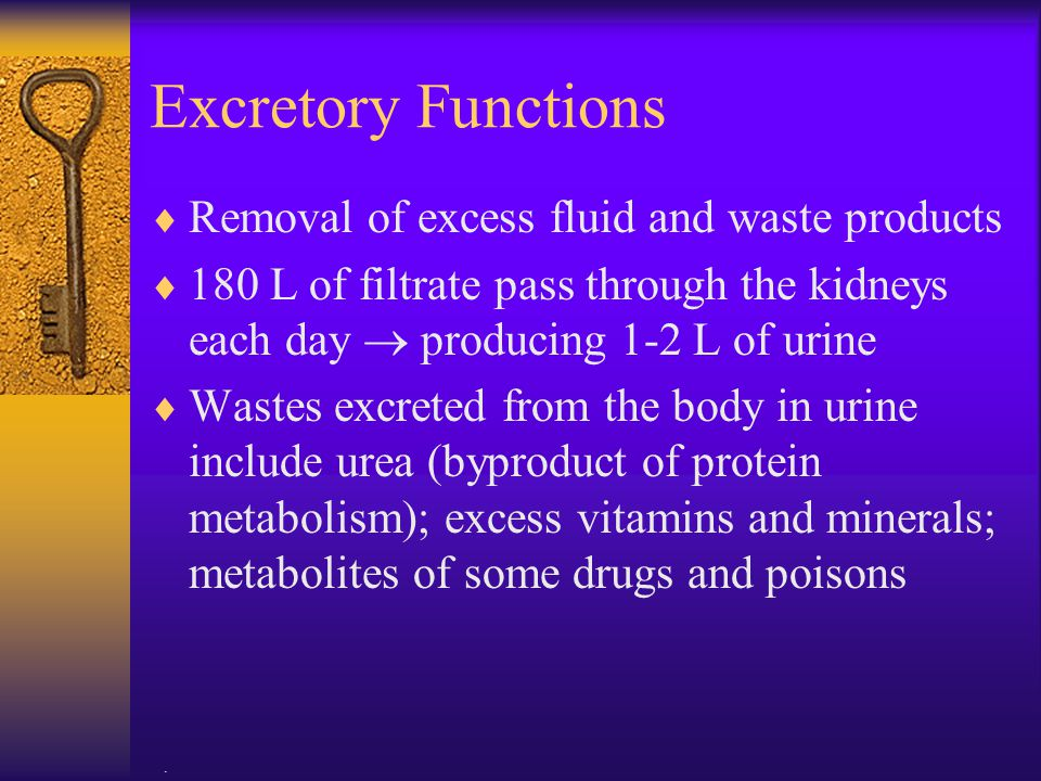 Excretory Functions Removal of excess fluid and waste products