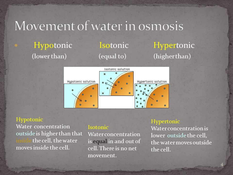 Movement of water in osmosis