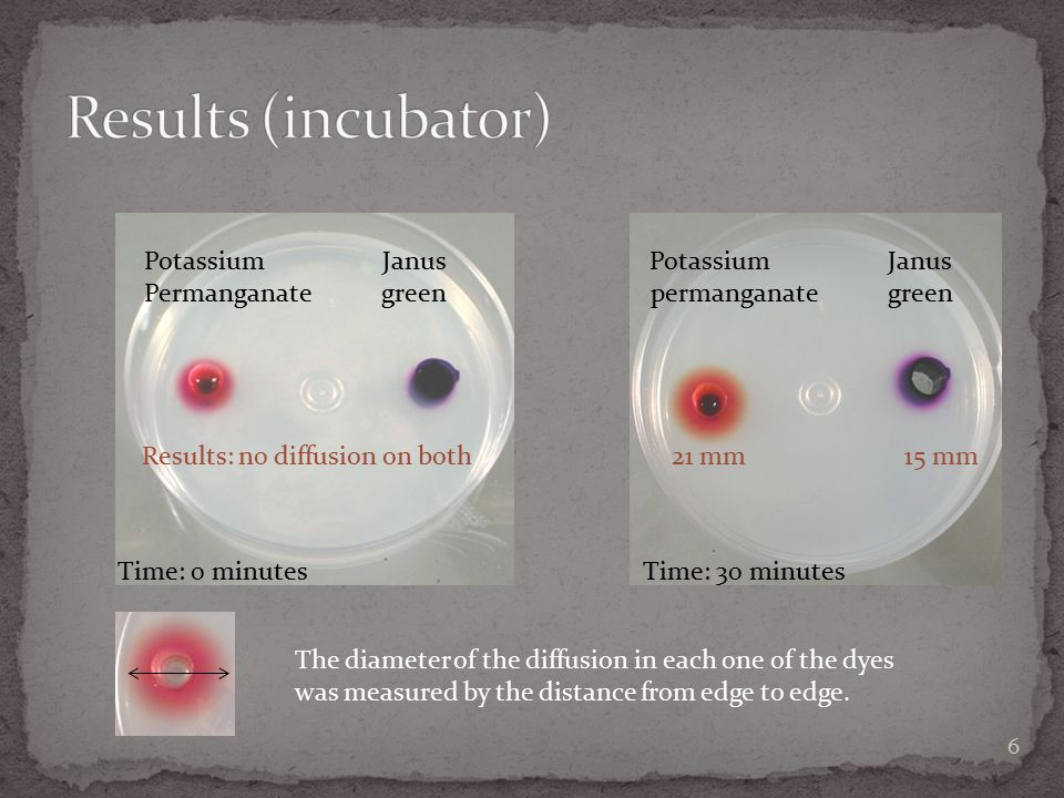 Results (incubator) Potassium Janus Potassium Janus