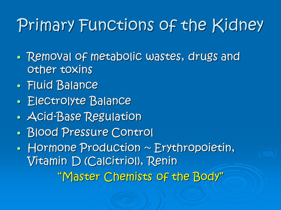 Primary Functions of the Kidney